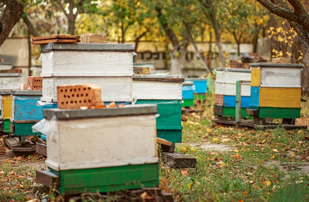 Apiary with wooden old beehives in fall. preparing bees for wintering