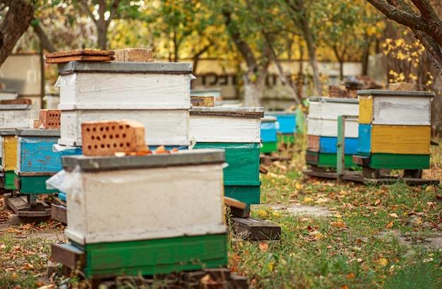 秋に木製の古い蜂の巣の養蜂場。越冬のためのミツバチの準備