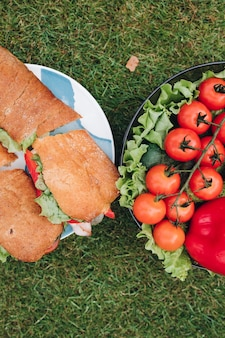 Appetizing fresh organic vegetable and tasty sandwich on plate surrounded by green grass meadow