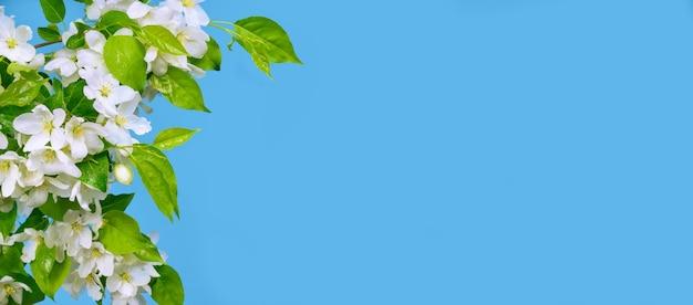 복사 공간이 있는 파란색 배경에 사과 꽃