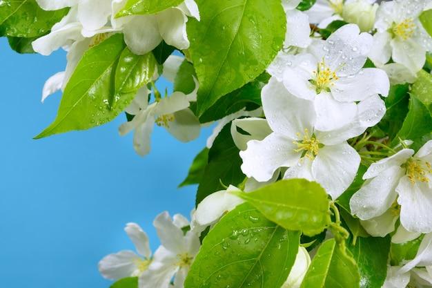 파란색 배경에 사과 꽃