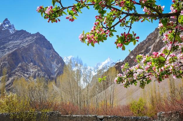 파키스탄 카라코람 산맥의 사과꽃과 아름다운 풍경.
