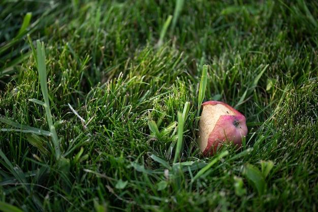 Яблочная сердцевина лежит в зеленой траве летом