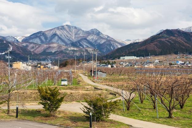 일본 나가노 현 야마노우치의 현지 마을과 중앙 알프스 산이있는 봄의 사과 농장
