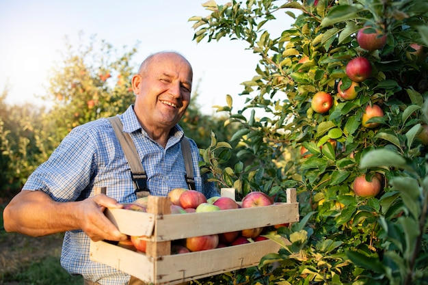Фермер apple в фруктовом саду