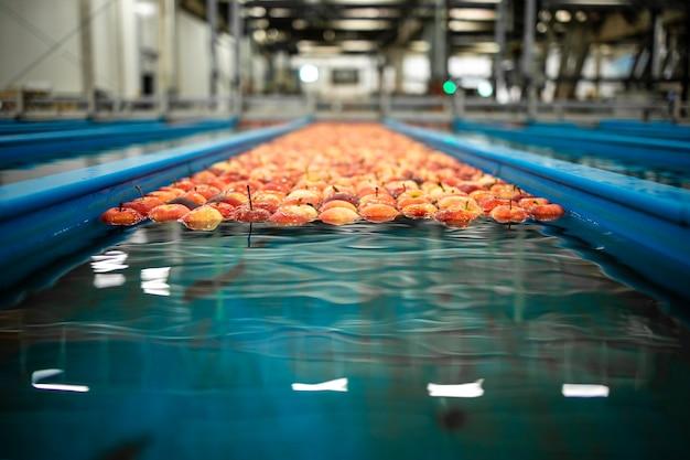 포장 및 유통을 준비하는 식품 가공 공장의 물 탱크 컨베이어에 떠있는 사과 과일.