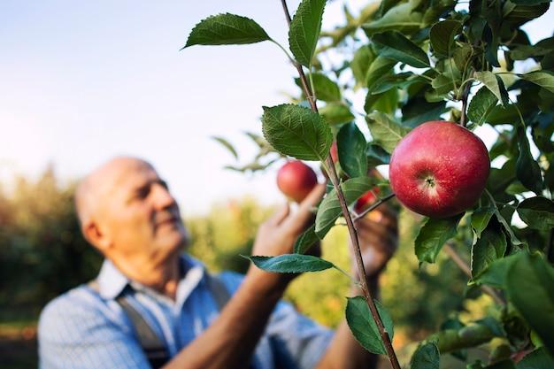 과수원에서 사과 과일 수확