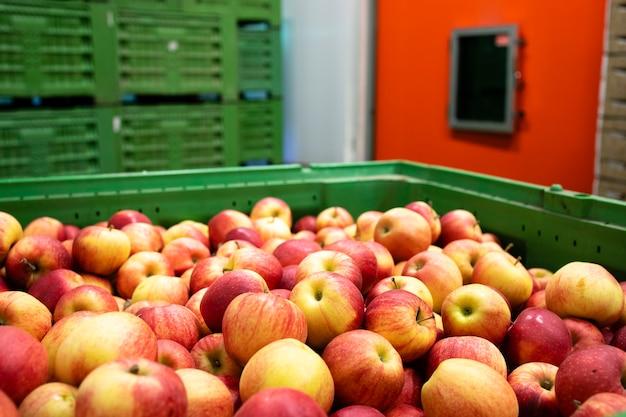 食品加工工場の冷蔵倉庫に移されるのを待っているリンゴの果実。