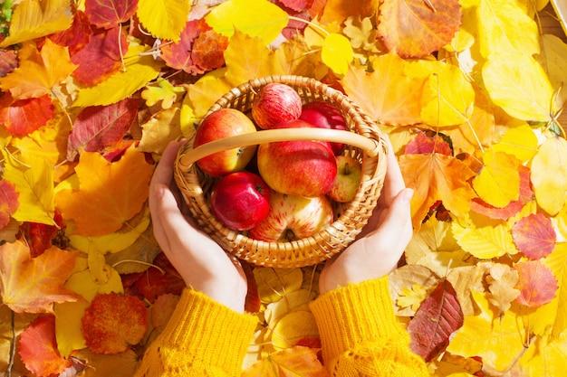 紅葉の壁に手にリンゴ