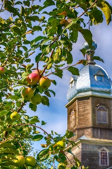 Apple tree on the background of a wooden church in russia. religious holiday.