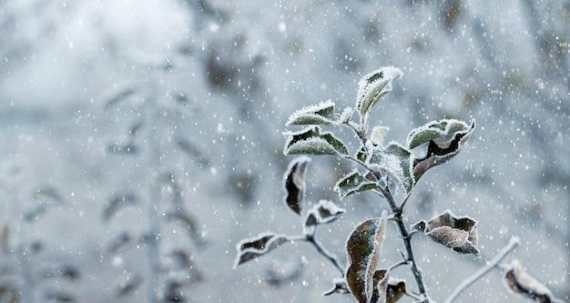 降雪時の冬の庭に乾燥した葉を持つリンゴの木の枝