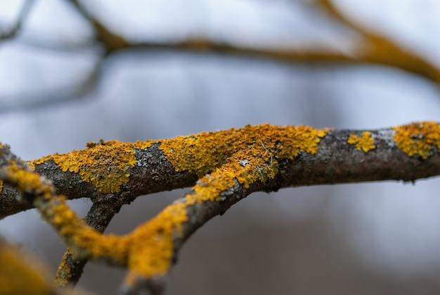 春の庭の木の地衣類のメンテナンスとリンゴの木の枝