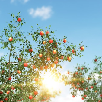 Apple tree full of fruits