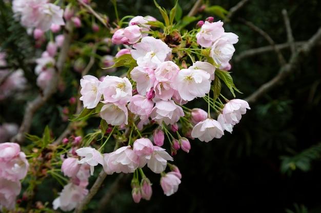 꽃이 만발한 사과나무. 핑크 꽃 배경, 여름