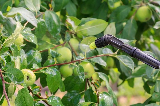 사과나무는 화학약품을 분사하여 곰팡이병이나 해충으로부터 보호합니다.