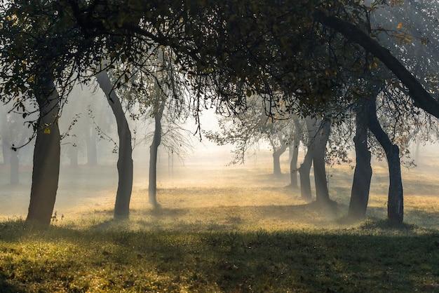 Саженцы яблони туманным утром в саду.
