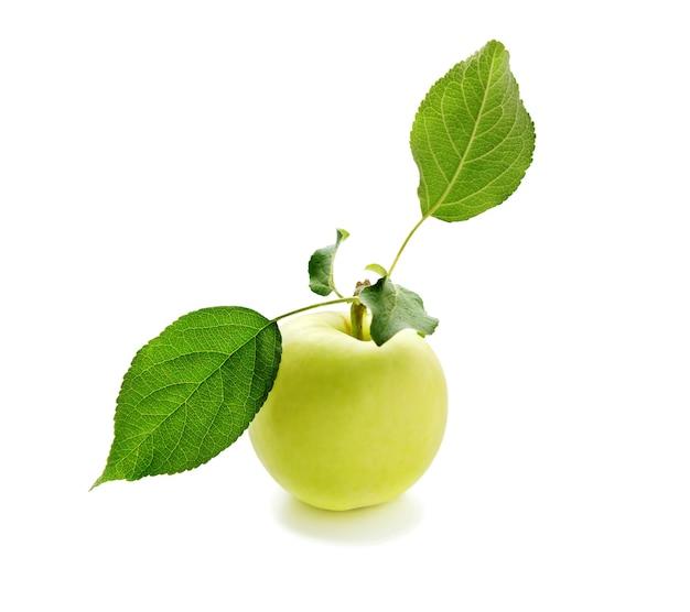白い背景で隔離の葉とリンゴ。葉のある枝に熟したリンゴ1個。