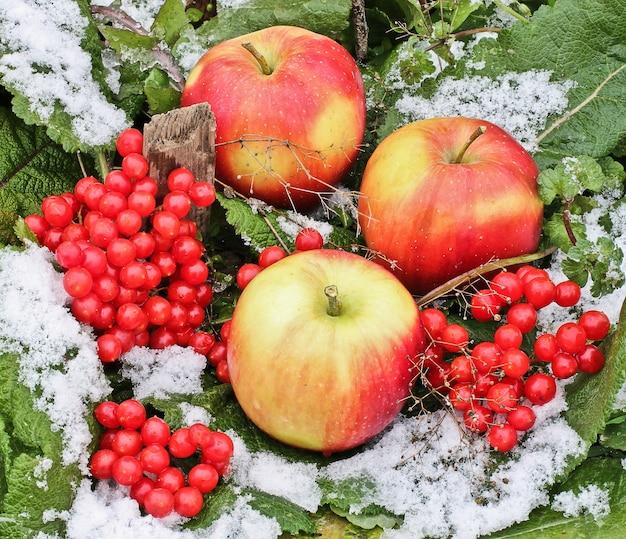雪の中のリンゴとガマズミ