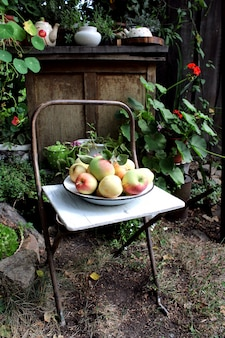 Apples on a chair in the garden