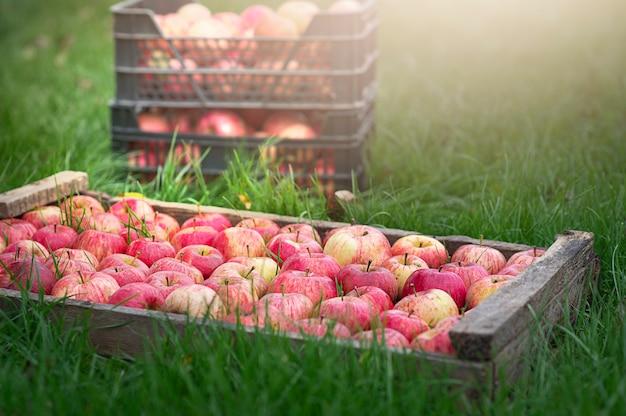 Яблоки в старом деревянном ящике