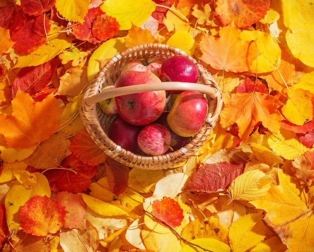 秋の葉の壁にバスケットのりんご
