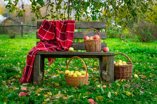 Apples picked in three baskets on wooden bench