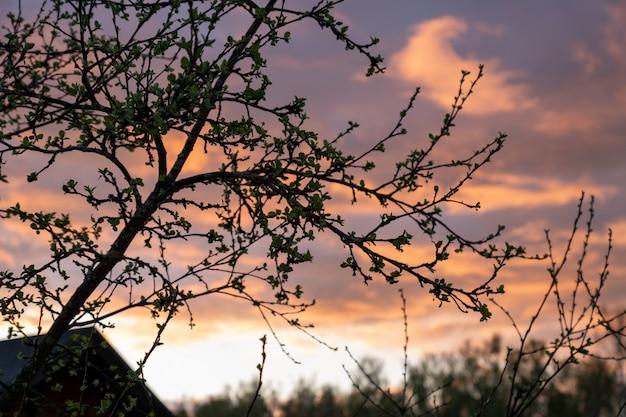 Апплет ветки с молодыми листьями на фоне прекрасного заката