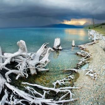 モンゴルのフブスグル湖で雷雨が近づいています。ターコイズブルーの水、海岸の古い木の切り株。アジア旅行。