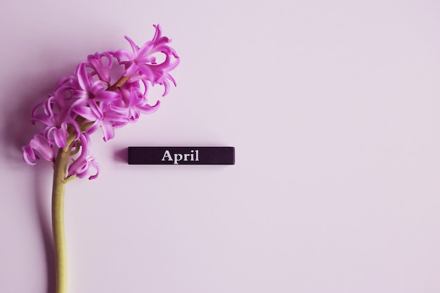 April word on a white background with purple hyacinths. spring concept