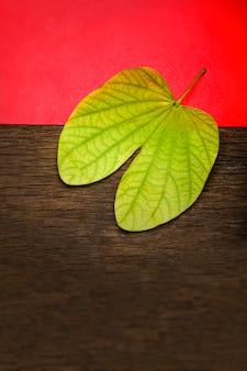 Aptaを使用したdussehraグリーティングカード/ bauhinia racemosa