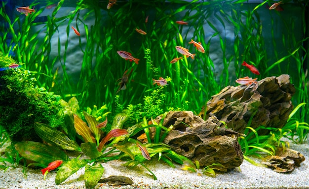 민물 수족관의 수족관 물고기와 조류. 수중 세계.