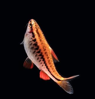 水族館の魚、クローズアップ