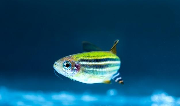 水族館の魚のクローズアップ