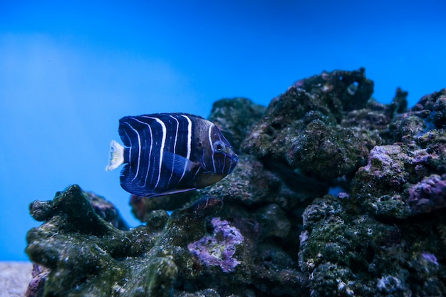 수족관 물고기 암초 바다 산호