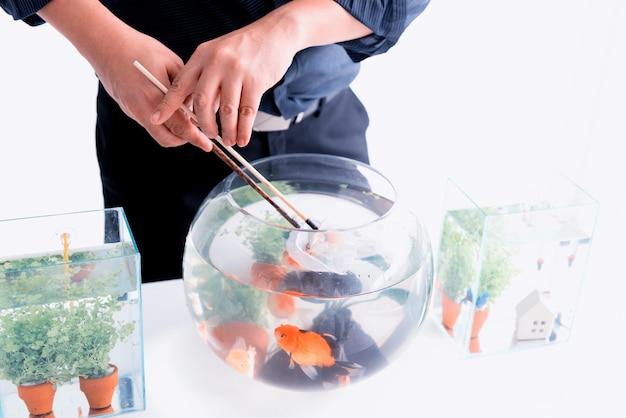 집에서 애완 동물과 취미를위한 수족관. 새 그릇에 물고기 잡기.