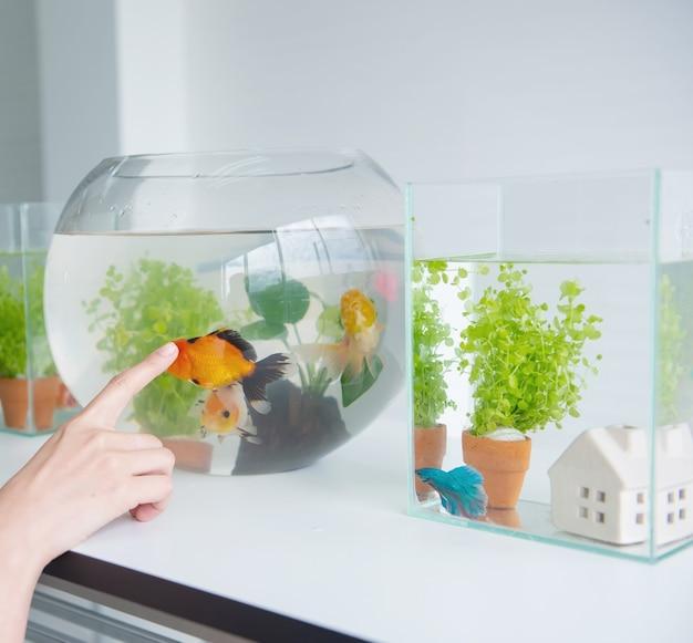 집에서 애완 동물과 취미를위한 수족관.