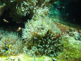 モンの海洋博物館の水族館、軟体動物