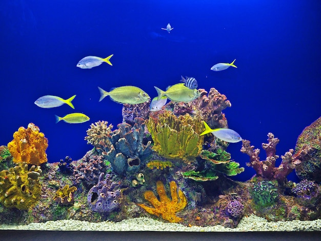 The aquarium with tropical fish and corals