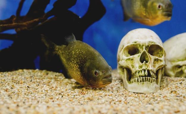 海洋水族館に魚がいる水族館、水中の魚