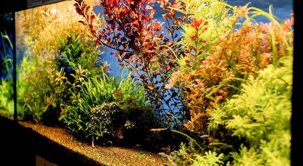 Aquariums with fish in oceanarium, fish underwater