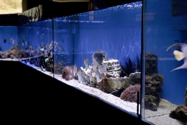 Aquariums with fish in oceanarium