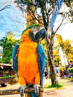 Ara ararauna. blue-yellow macaw parrot portrait. ara macaw parrot