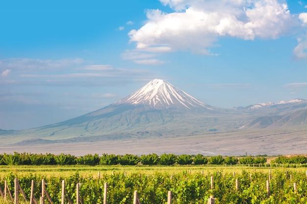 Ararat mountain and field