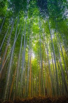 Arashiyama bamboo forest kyoto
