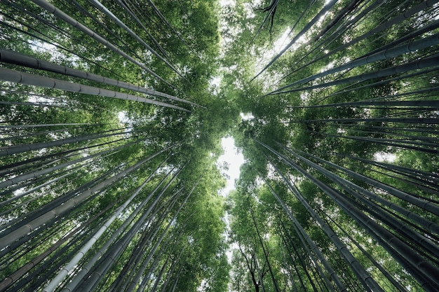 Arashiyama bamboo groves лес в японии