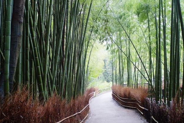 Арасияма известен как место расположения знаменитого бамбукового леса.