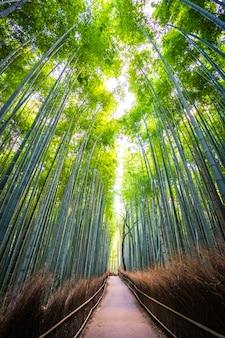 Красивый пейзаж бамбуковой рощи в лесу в arashiyama kyoto