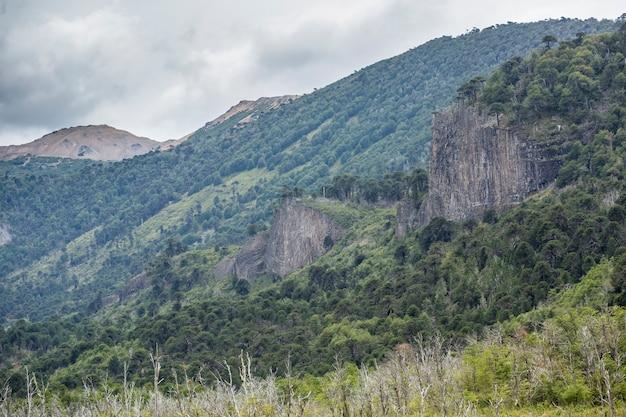 Араукария лес араукана с горами