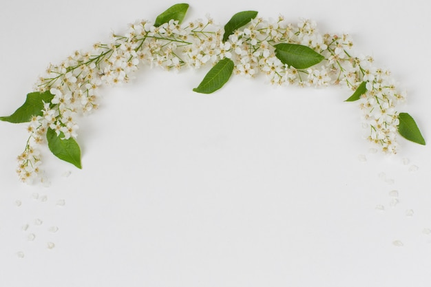 Arch laid out the branches of the bird cherry