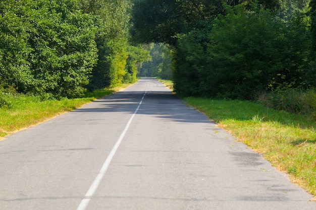 人けのないアスファルト道路の木のアーチ